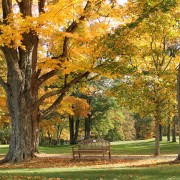 Fall Oaks bench GRT revwarheart Morguefile Free
