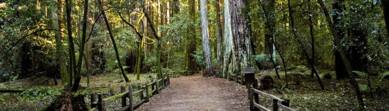 Path forest unsplash free photo-1420582282039-a6d11404cb66