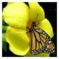 butterfly-ylw-flwr_small5